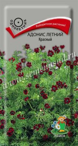Адонис летний Красный (ЦВ) («1) 0,3гр.