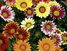 Пакетированные цветочные