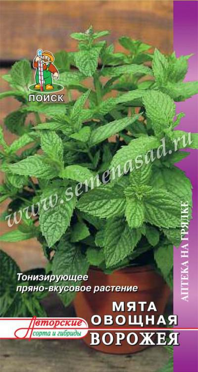Мята овощная Ворожея (А) (ЦВ) 0,1гр.