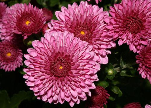 Весовые семена цветов