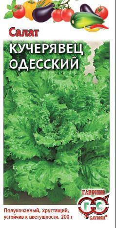 Салат Кучерявец Одесский 0,5 г хрустящий сер. Традиция Н12