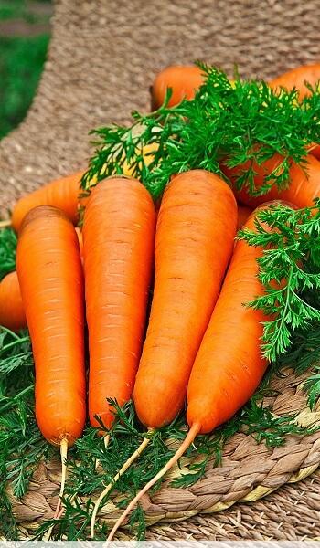 Морковь Курода Шантанэ, пак.1кг